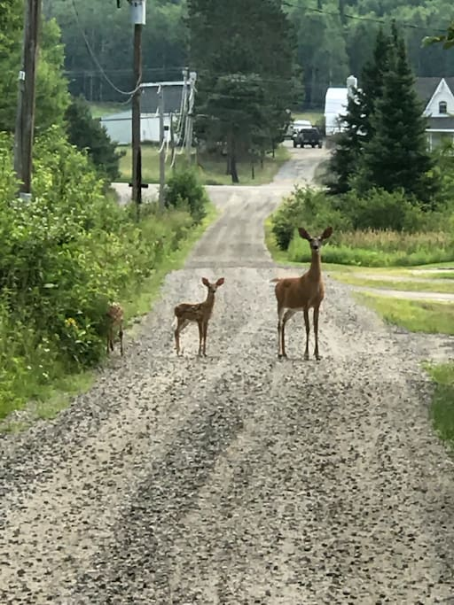 Welcome to Serene Point. We are often spotted crossing the driveway. Let us show you around the property.