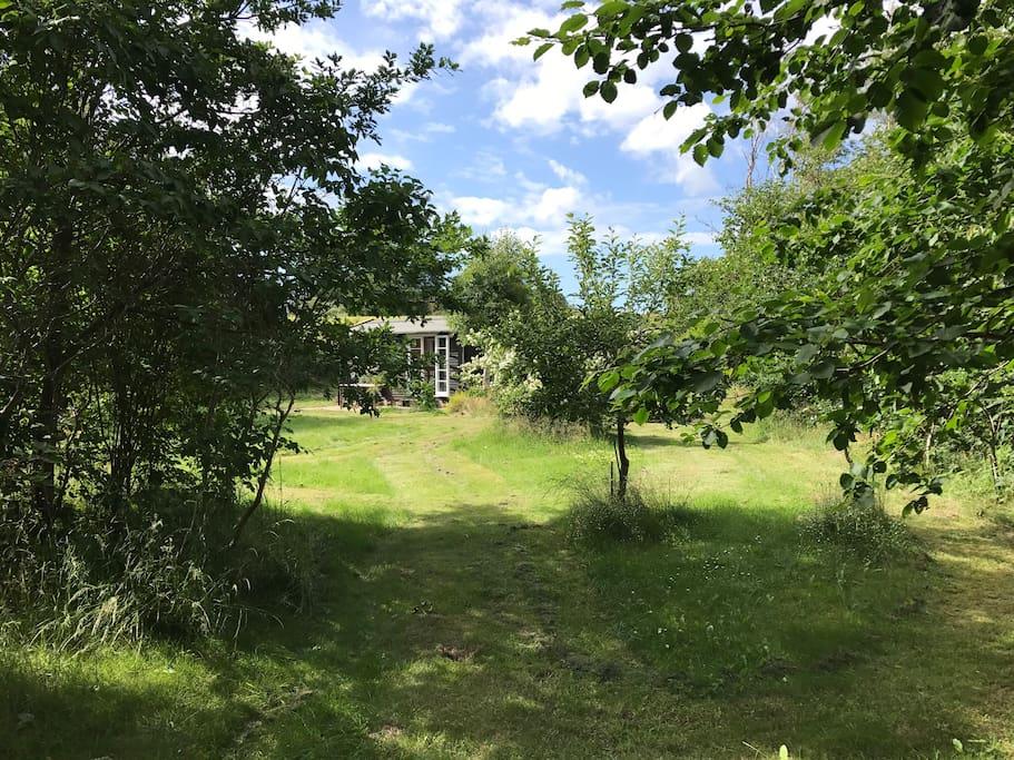 Kig gennem haven mod Hus 1 (køkken/stue). Marken ses i baggrunden.