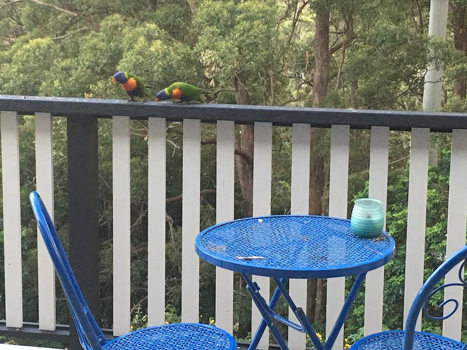 Enjoy an early morning coffee or afternoon wine with the beautiful birds