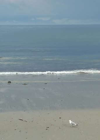 Beach Condo Guidebook