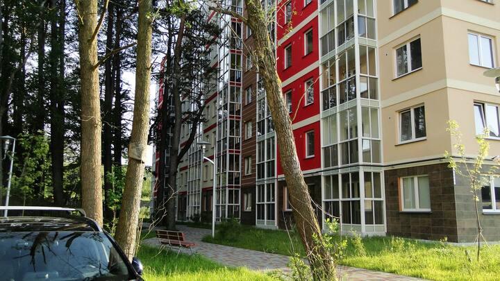 Студия с видом на сосновый лес!!!