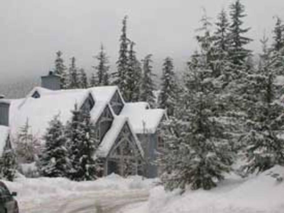 Treeline in Winter....
