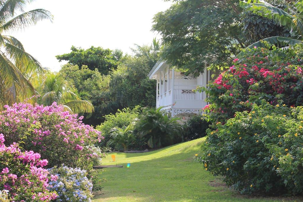 Jardin exotique de la résidence