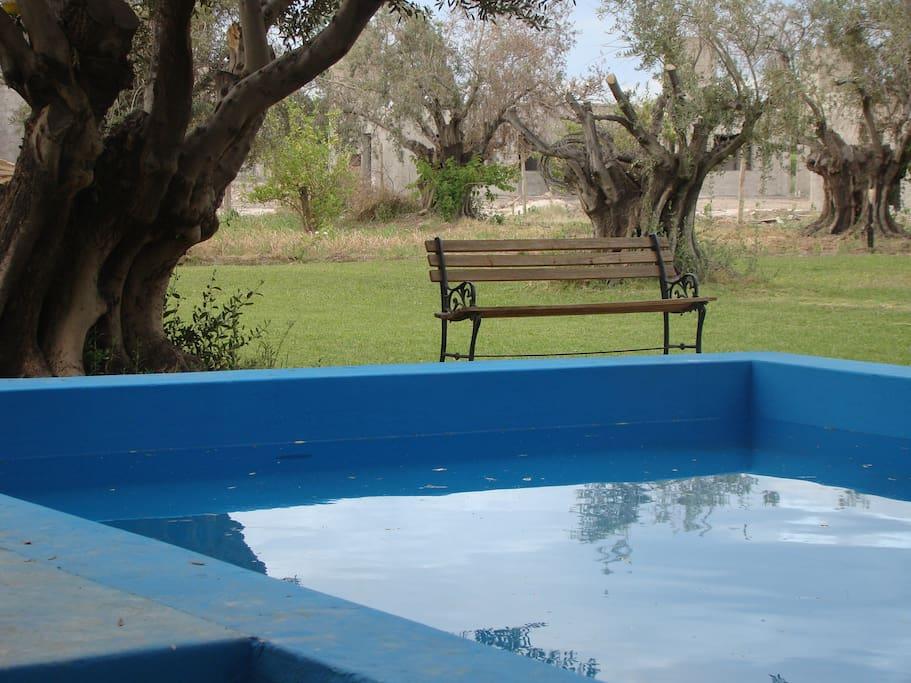 La pileta está entre los árboles y permite su uso incluso con el fuerte sol sanjuanino de la siesta