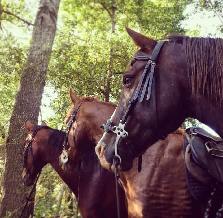 Horses enjoying our water break