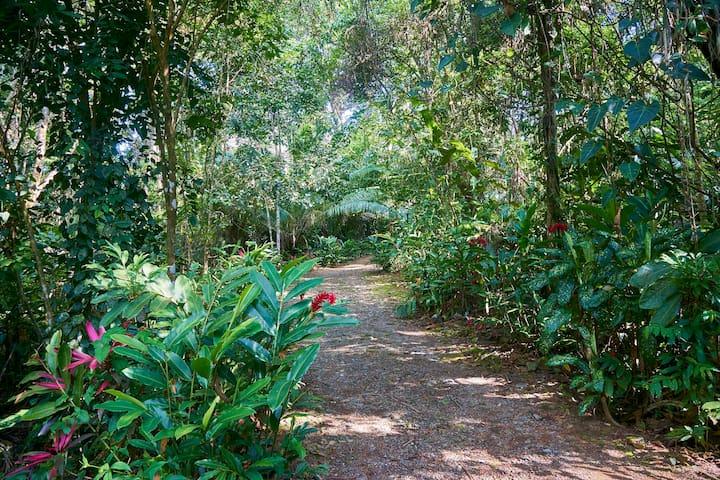 Private drive to the villa