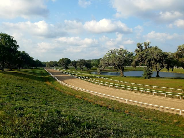Come and stay on a horse farm near Micanopy - Micanopy - Bungaló