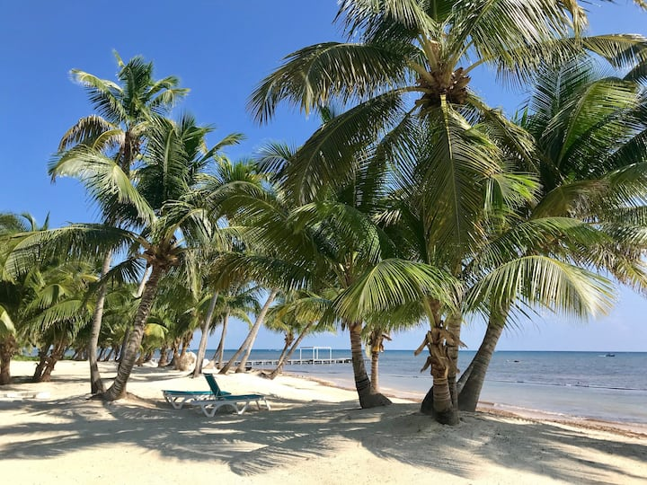 Caribbean BeachFront, up to 6, WIFI, PADI (24A)