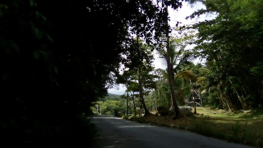 Country Garden Camping @ Eco Camp Barbados (2)