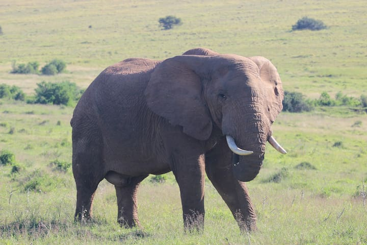 At Addo Elephant park the big 5 are easily seen. About an hour and a half away from JBay.