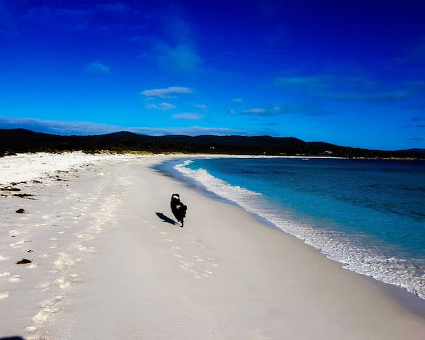 Main Beach Binalong Bay is pet friendly. Bring your best friend on an epic adventure