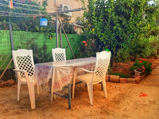 Best of Safed