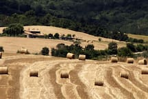 La Fornacina among the rolling hills