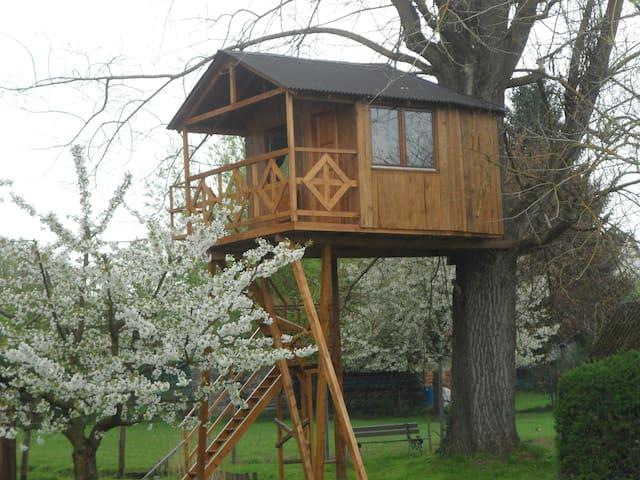 Cabane dans un arbre Gite insolite