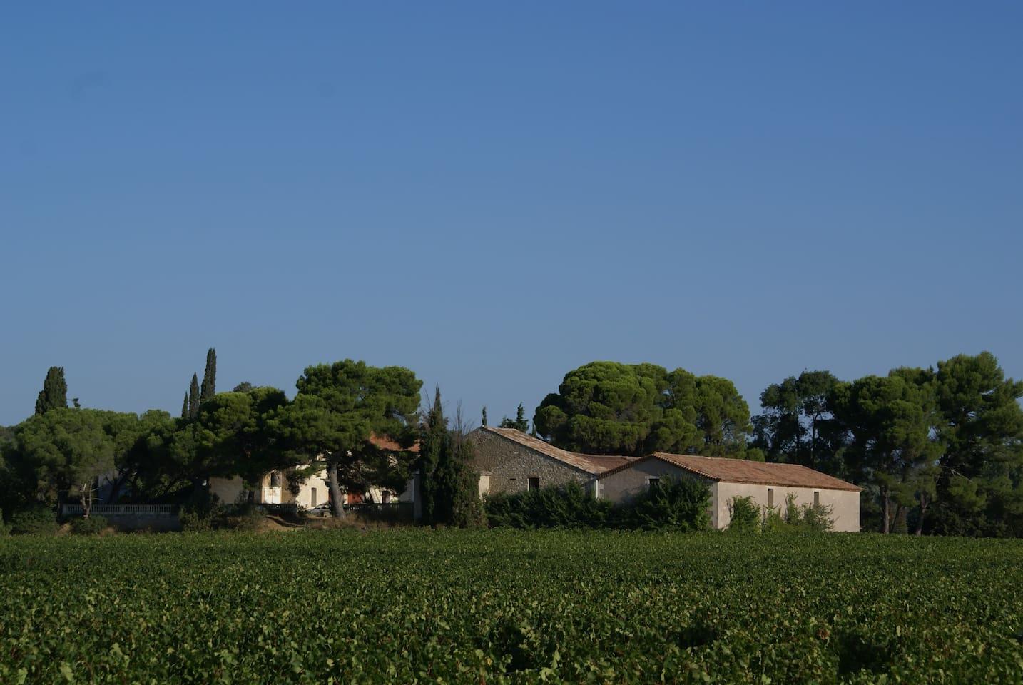 Le domaine au coeur du vignoble