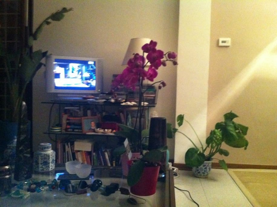 living room , tv