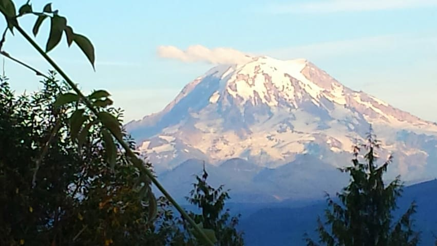Rainier in Our Backyard!