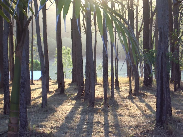 Twin Bunya Park - farm stay