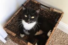 Jumbo, a resident kitty