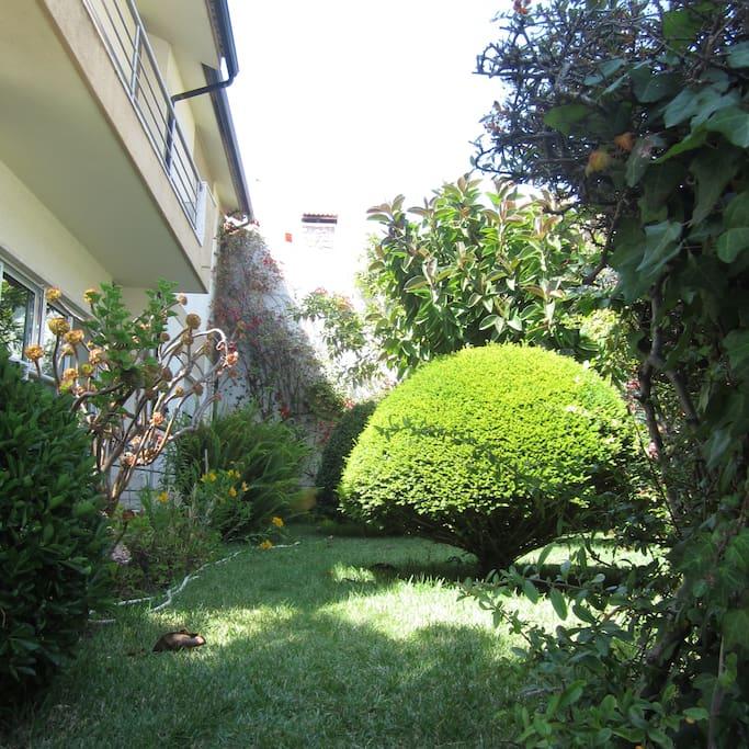 garden, flowers, sun