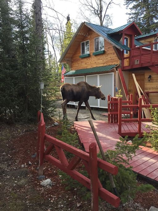 The parking spot (if available, lol) for the studio! The studio is directly above where our friendly moose is.