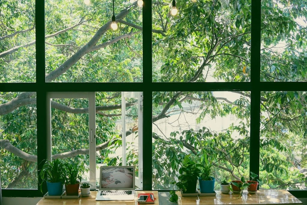 Amazing morning through green and nature window of Tree House !  Picture of Ayami (from Japan)