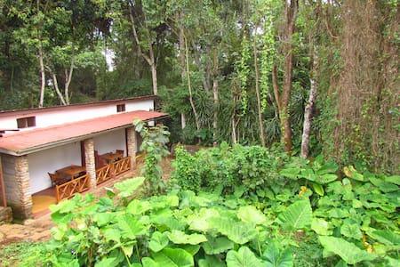 BNB on Foothills of Kilimanjaro - Marangu