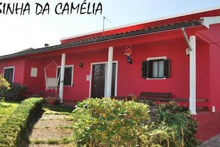 Casa com Jardim e Piscina - São João de Areias