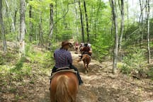 Guided trail rides available.