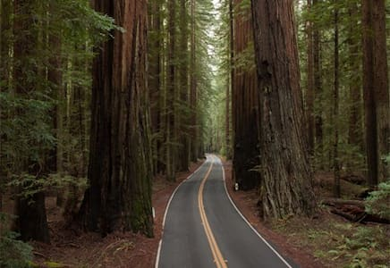 Giant Redwoods, Cozy Cottages #6