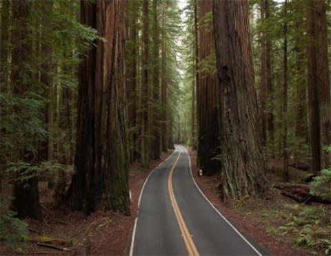 Giant Redwoods, Cozy Rooms #6
