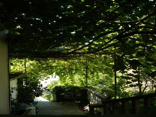 Villa with a garden by the sea in a quiet place - Herceg Novi - Villa