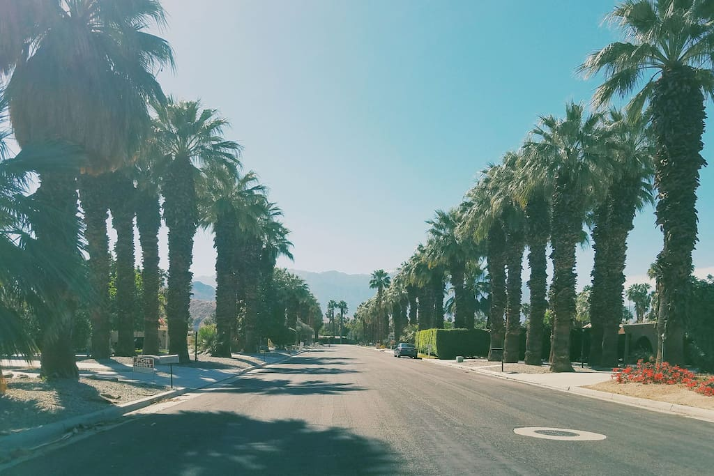 Palm Tree Lined Street, West Facing