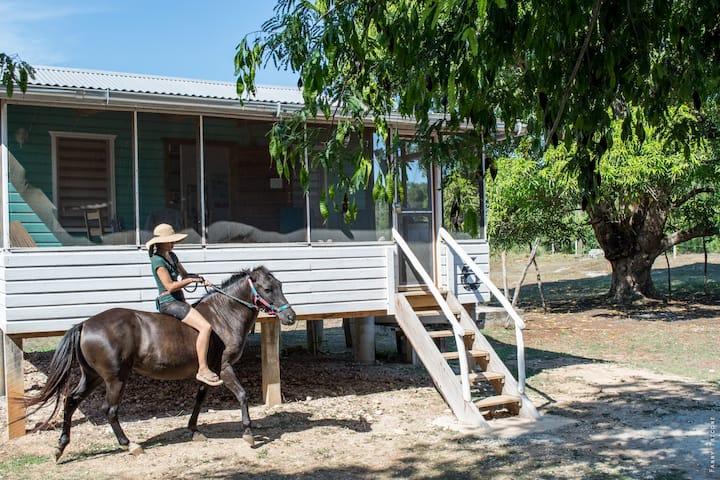 maison en bois dans une ferme a cheveaux