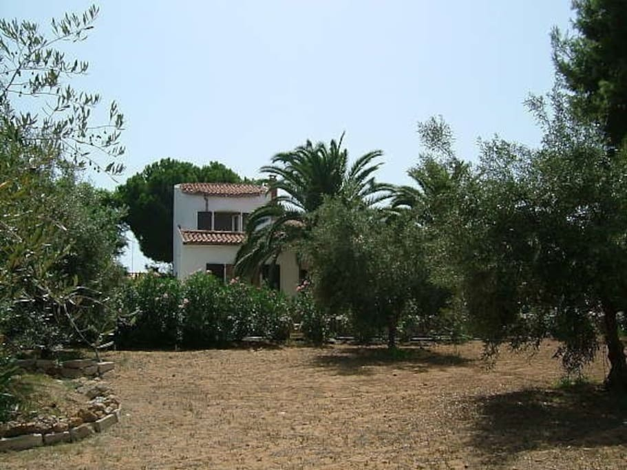 Tower of main house from olive grove