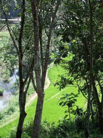 View from Rambutan Chalet