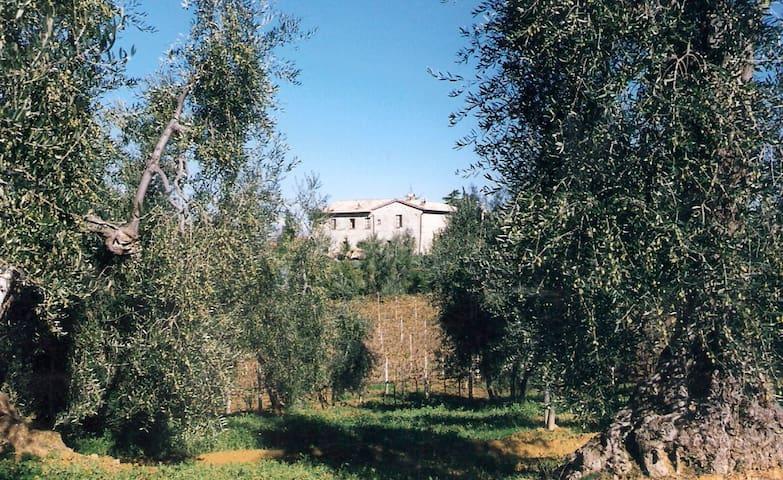 """""""IL COLOMBAIO""""Vacanze tra gli Ulivi - San Quirico - Byt"""