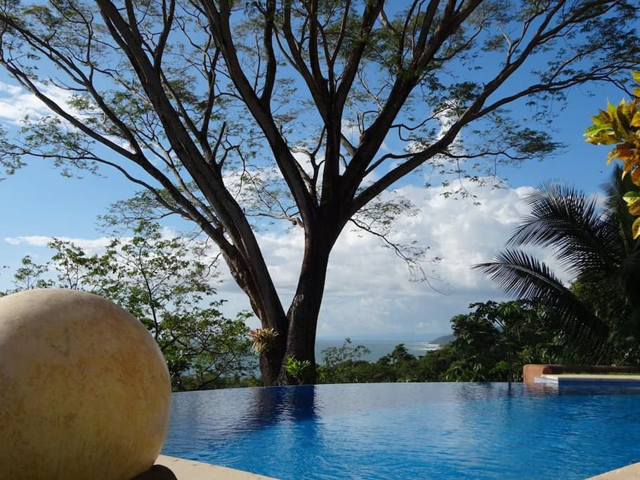 Pool with Guanacaste tree