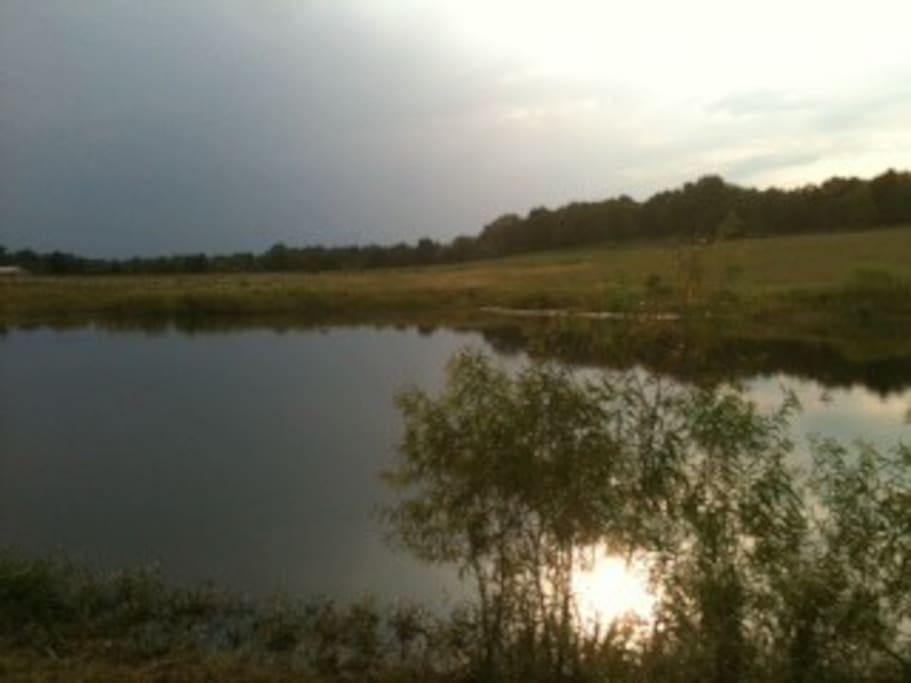 Back pond at sunset