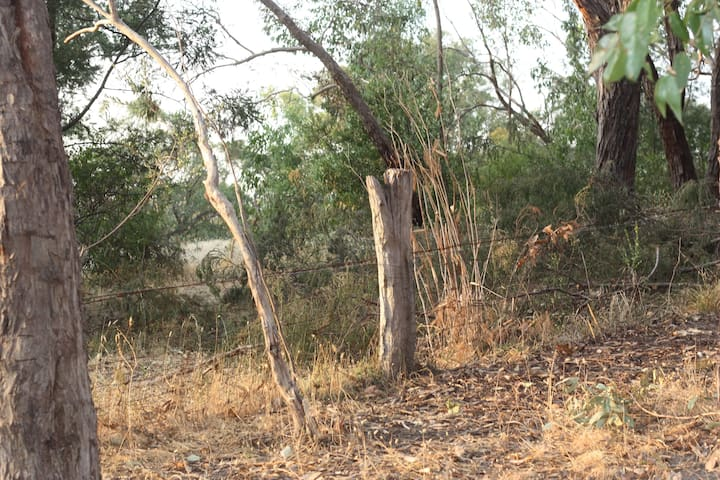 Bushland Bell Tent - a cosy Australian eco stay