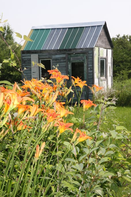 Hemerocallis are on the of many types of flowers you will find in our yard!