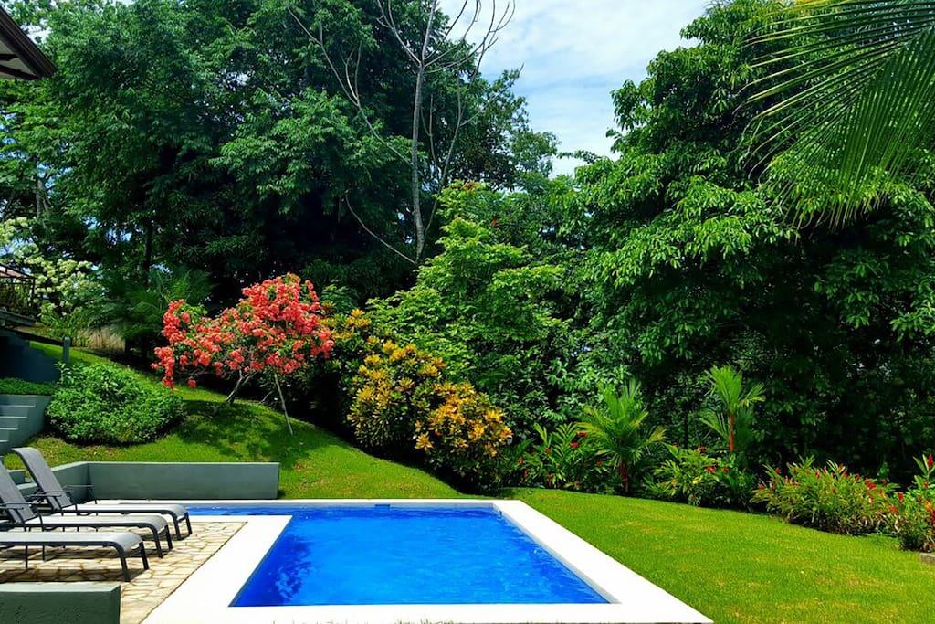Lush rainforest greenery