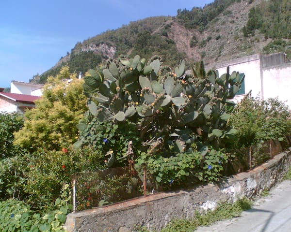 Sicilia - Terme-Vigliatore 50m mare