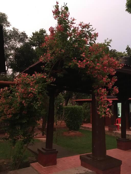 Maloti flowers