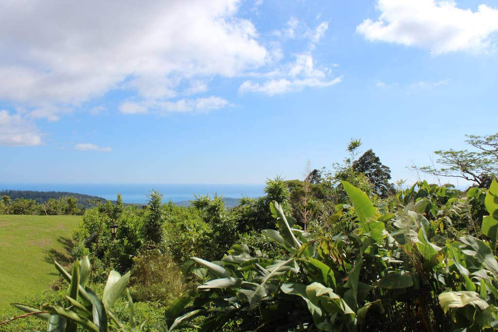 This is the view from your front door on a beautiful Hawaiian day!