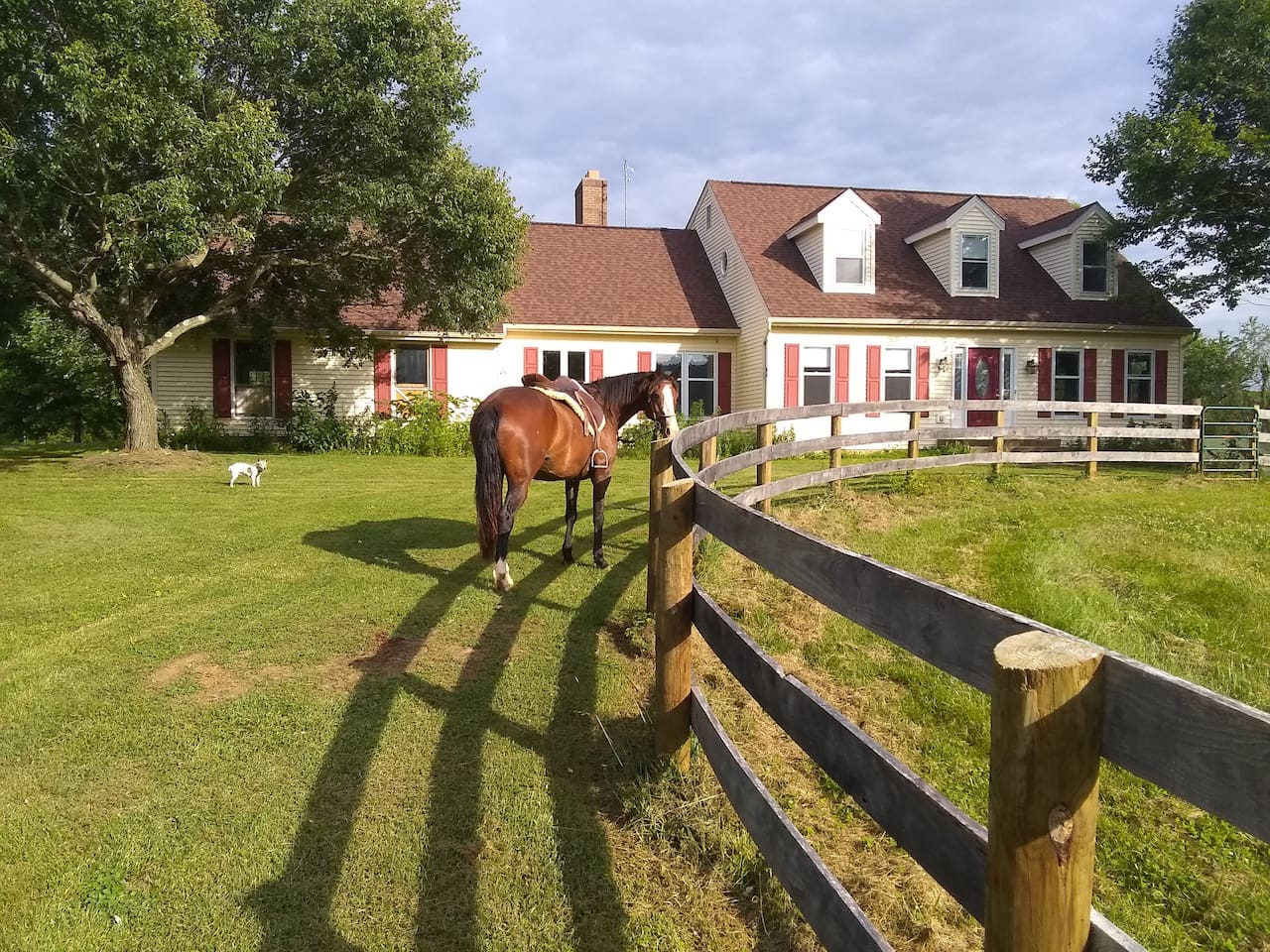 Front of house.  Chiquileen, my horse and Annie, my Jack Russell.