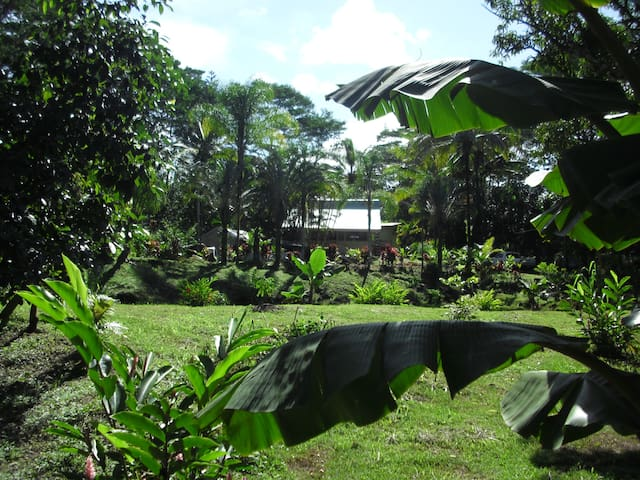 VIEW OF PROPERTY FROM BANANA GROVE