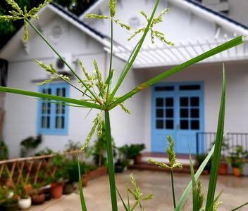 Nhà vườn ngoại ô Thách Thất,Hà Nội