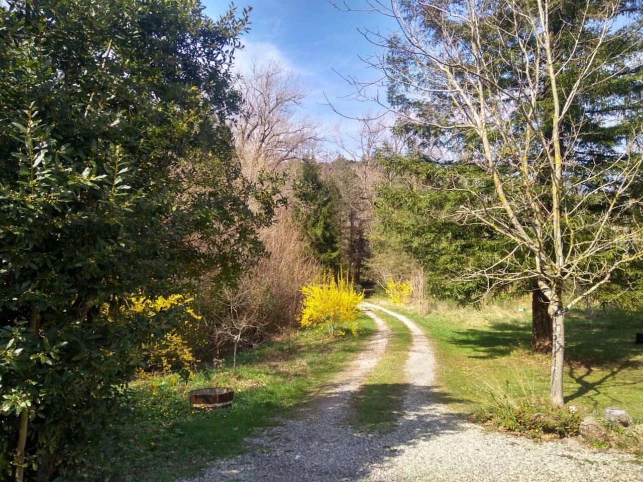 Le chemin vers la maison avec, à droite, le séquoia