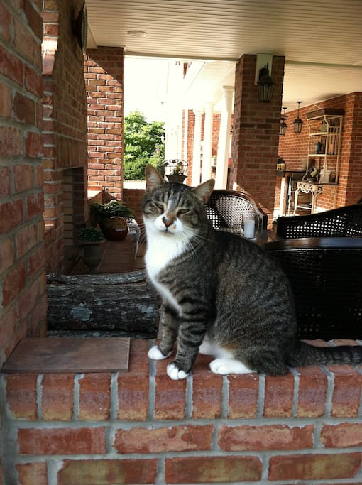 Samson our outside cat!